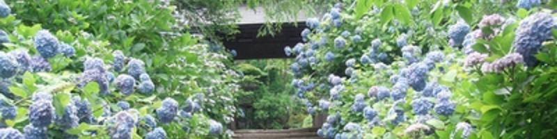 鎌倉の花の名所
